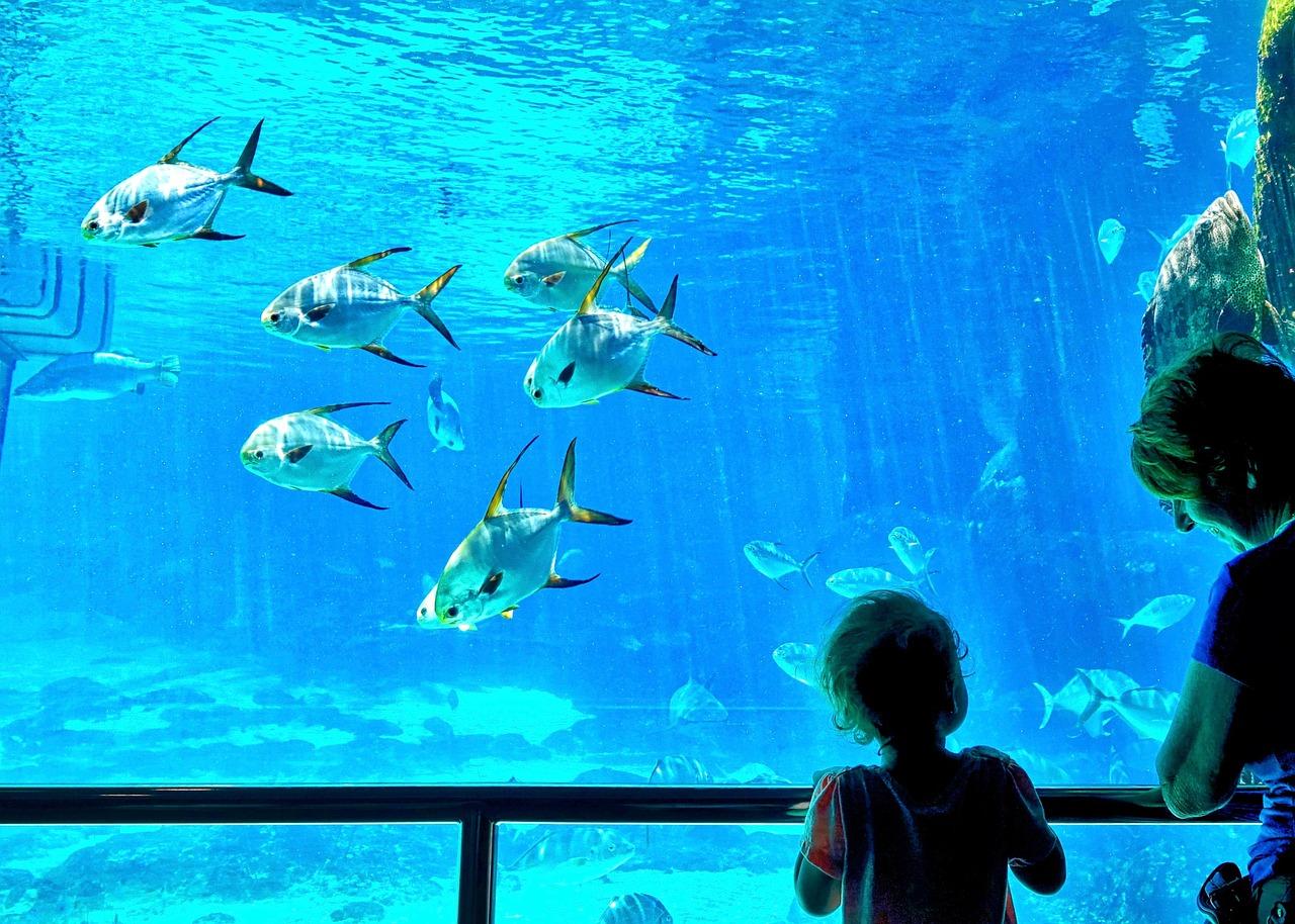 Top Aquariums Dans Le Monde En 2016 Proxifun