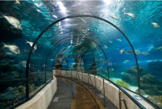 Aquarium La Rochelle - A la une, Zoo & Aquarium en Nouvelle Aquitaine ...