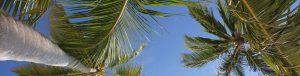 palmier 2