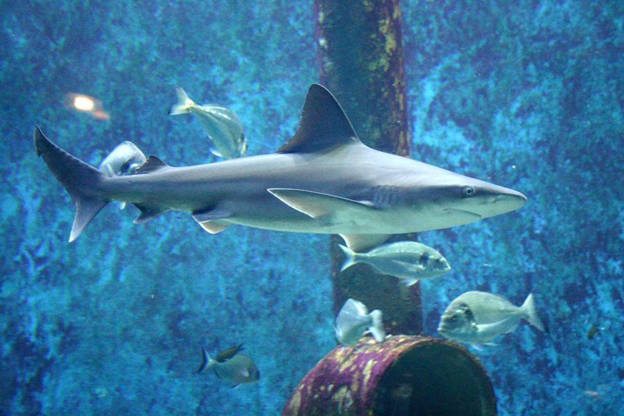 aquarium lyon
